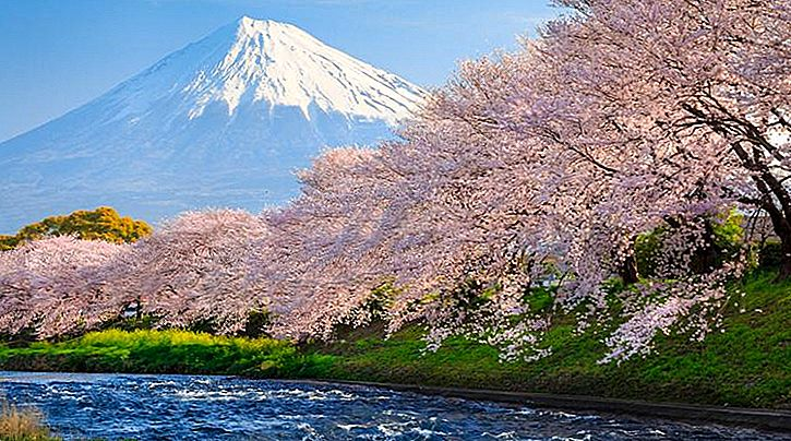 Bloom og Beautiful! Hvor kan man se Cherry Blossoms i Japan?