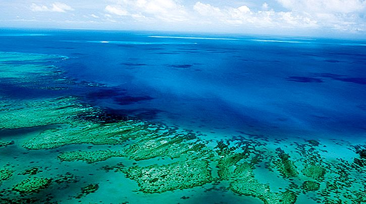 11 Fakta Luar Biasa Tentang Great Barrier Reef!