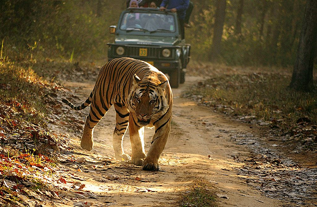 En tur til Kanha National Park