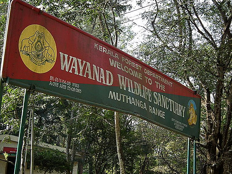 Slon Država-Wayanad Wildlife Sanctuary