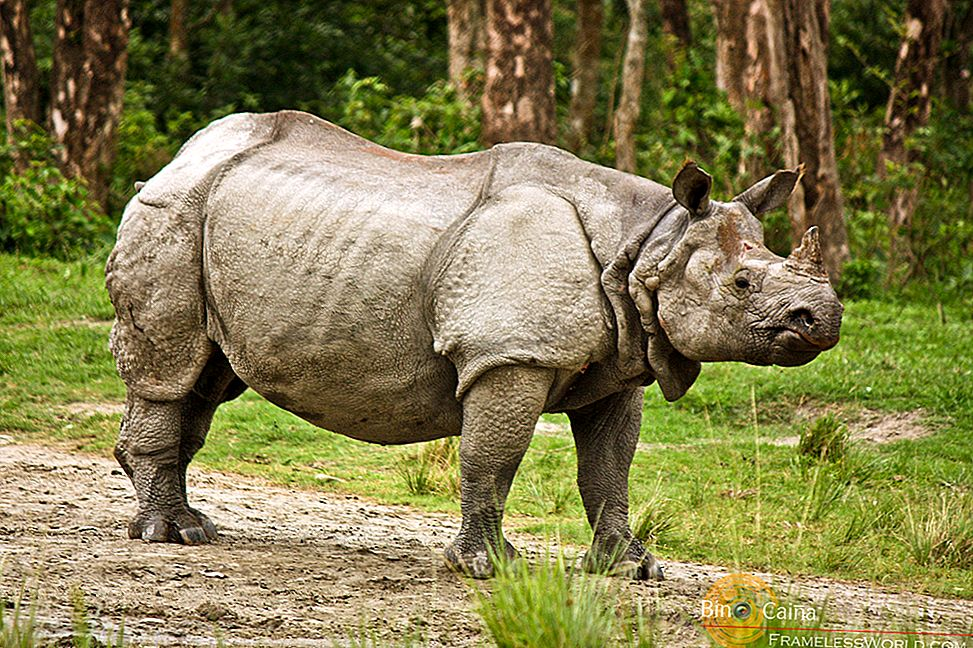 Rhino Country-Jaldapara Wildlife Sanctuary