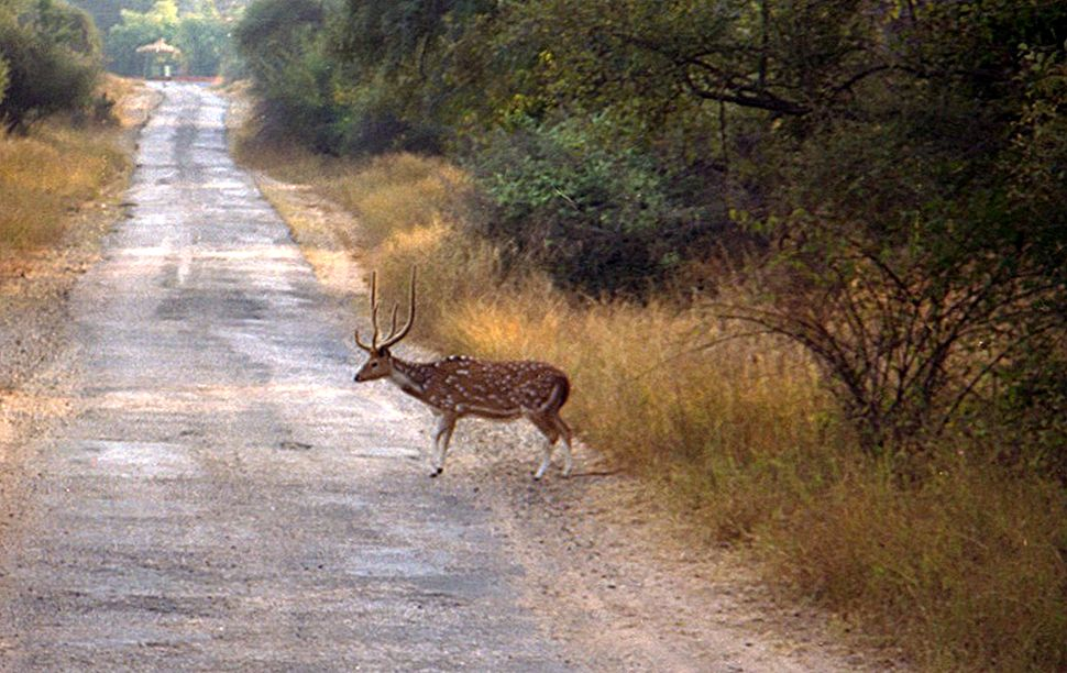 Aravali Retreat-Sariska National Park