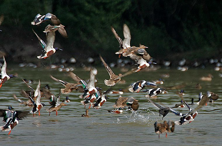 Avian Capital-Sultanpur National Park