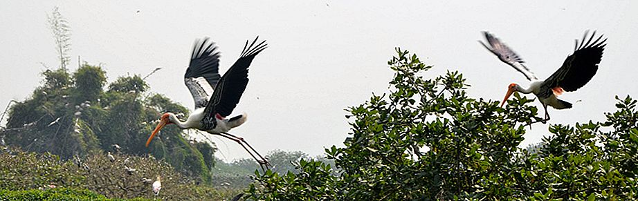 The Bird Paradise- Vedanthangal Bird Sanctuary