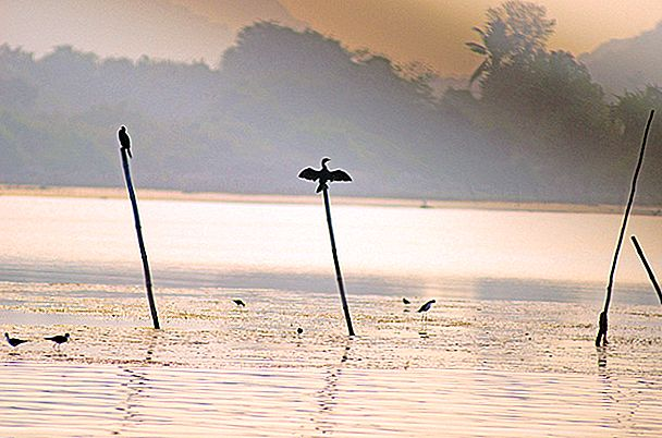 Warna Air- Chilika Lagoon