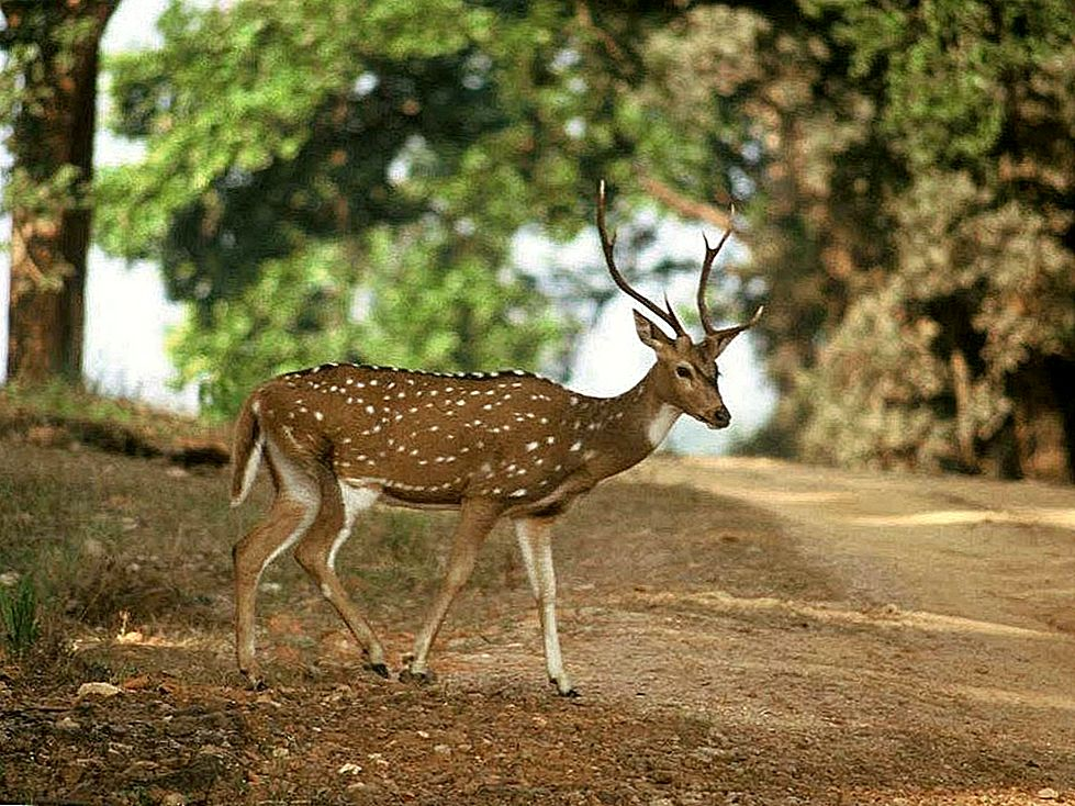 Περιπέτεια στο Kipling Country- Kanha National Park