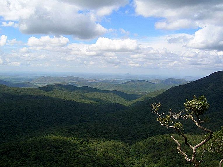 Bandipur-Mudumalai: Di ​​Foothills of Blue Mountains