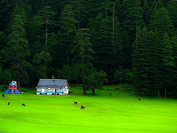 Dalhousie- Hills and Meadows in Wonderland