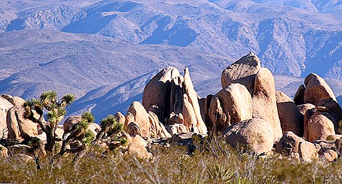6 beste campings in Joshua Tree National Park & ​​Camping Details