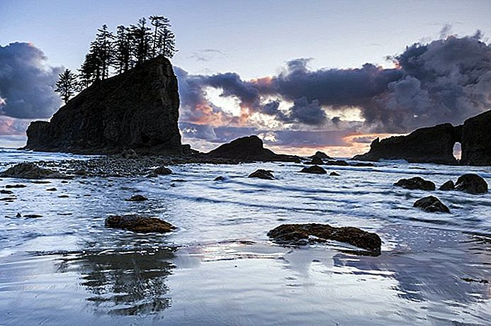 Exploring Olympic National Park en the Hoh Rain Forest: A Visitor's Guide