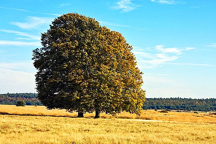 استكشاف Hoge Veluwe National Park: دليل الزوار